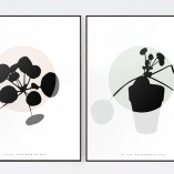 PLANTE- Pilea Peperomioides / Round/ Limited Edition