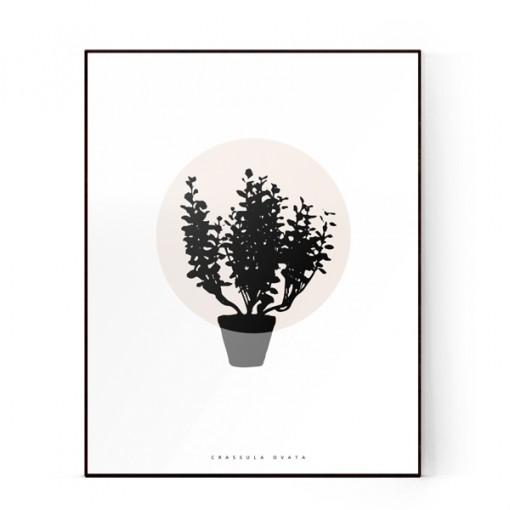 plants-02-600X600-WEB
