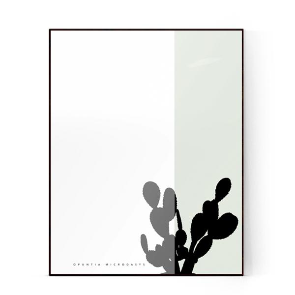 PLANTE-Opuntia microdasys