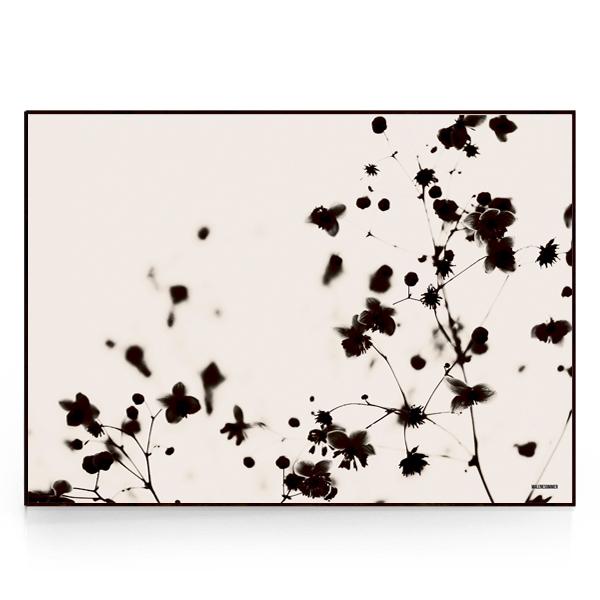 X-Rays-The hidden beauty